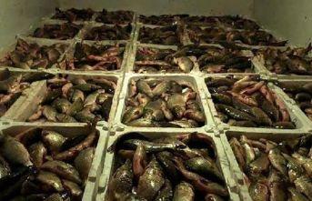 Kamyonet kasasında 2 ton balık! 10 bin lira ceza kesildi