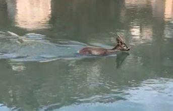 Dengesini kaybederek baraj gölüne düştü, böyle...