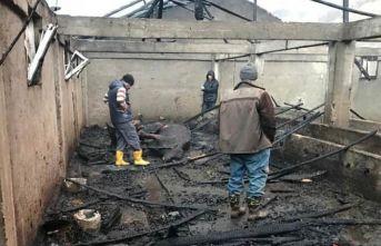 Ahırda yangın çıktı 13 hayvan telef oldu
