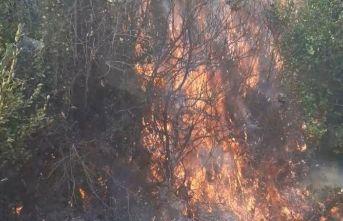 Samandağ'da zeytinlikte korkutan yangın