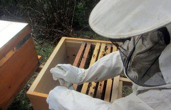Arılar strese girdi