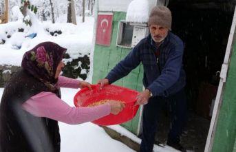 Trabzon'da koronavirüs önlemi köye gitmek oldu