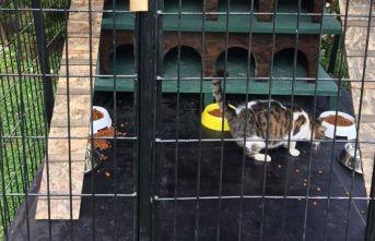 Sahipsiz kediler için 'Kedi Evi'