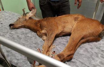 Ordu'da tedavi edilen yaralı hayvan sayısı artıyor.