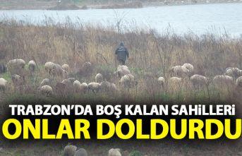 Trabzon'da boş kalan sahilleri onlar doldurdu