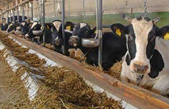 Destek çağrısı geldi!: Trabzon'da hayvancılık zorda!