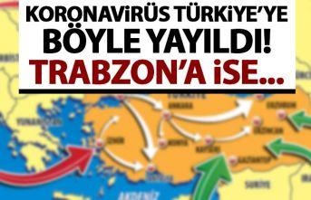 Koronavirüs Türkiye'ye böyle yayıldı! Trabzon'a...