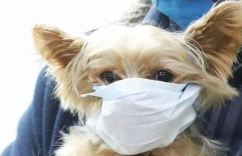 DSÖ açıkladı! Koronavirüs hayvanlardan bulaşıyor mu?