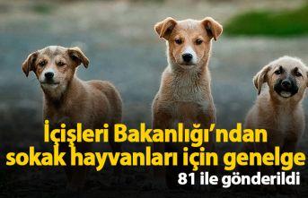 İçişleri Bakanlığı'ndan sokak hayvanları...