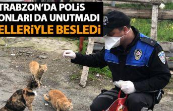 Trabzon'da polis sokak hayvanlarını da unutmadı!