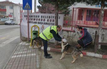 Trabzon'da sahipsiz hayvanlar unutulmuyor