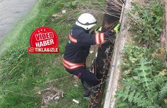Büyükşehir Belediyesinden köpek kurtarma operasyonu