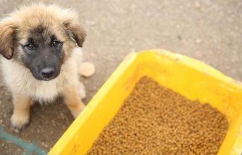 Bayburt'ta sokak hayvanlarına mama ve su bırakıldı