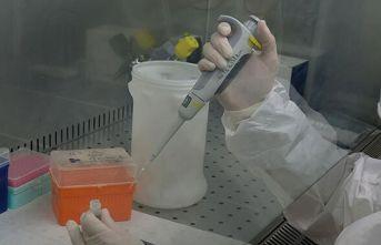 Koronavirüste immün plazma tedavisinde ilk sonuçlar...