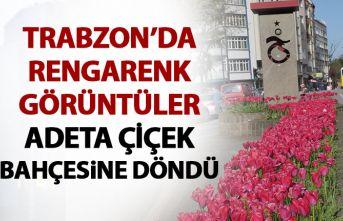 Trabzon çiçek bahçesine döndü