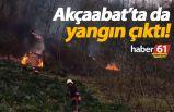 Akçaabat'ta da yangın çıktı