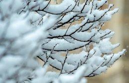 Giresun'da çiftçiler karla mücadele ediyor