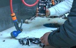 Balıkçılardan hamsi temizleme rekoru