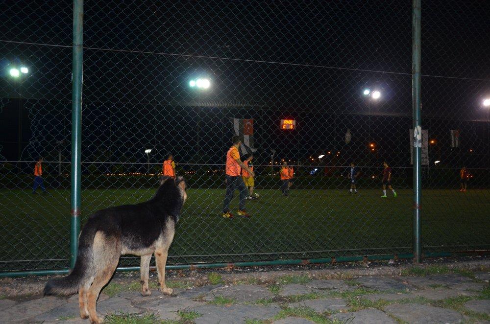 Sokak köpeğinin futbol tutkusu!