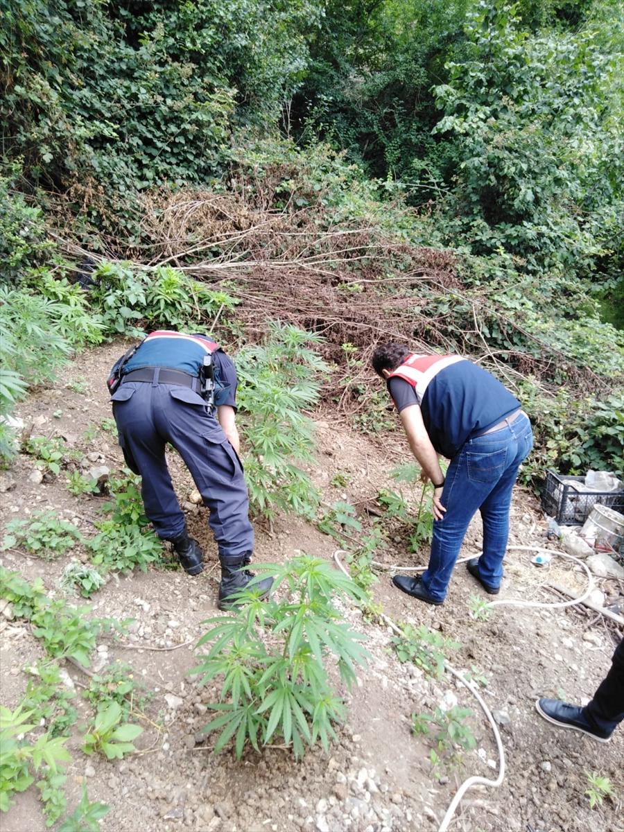 Trabzon'da 3 ayrı adrese  uyuşturucu operasyonu