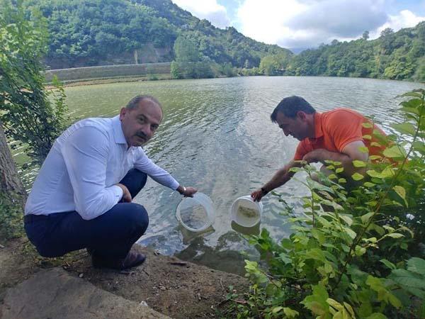 Trabzon'daki göletlere 53 Bin sazan yavrusu bırakıldı