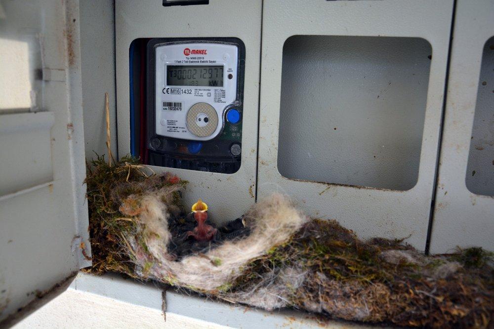 Kuş yuva yaptı diye elektriksiz yaşıyorlar