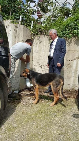Köpeği dereye atan işçi için karar verildi