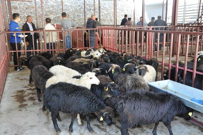 Gümüşhane'de genç çiftçilere hayvan dağıtıldı