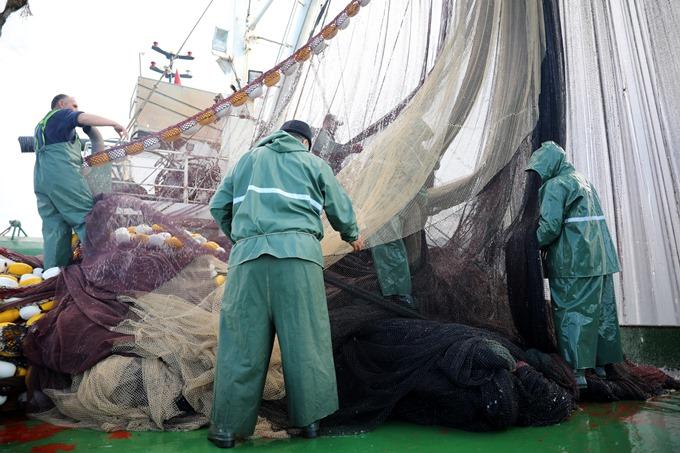 Karadeniz'de hamsi sürüleri tehdit altında
