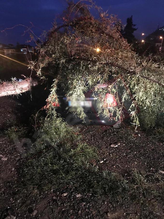 Trabzon'da otomobilin üzerine ağaç düştü