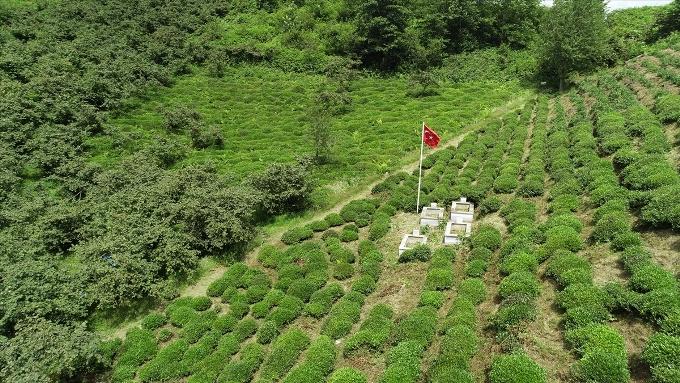 Giresun'daki şaban kalesi tabiat parkı oluyor