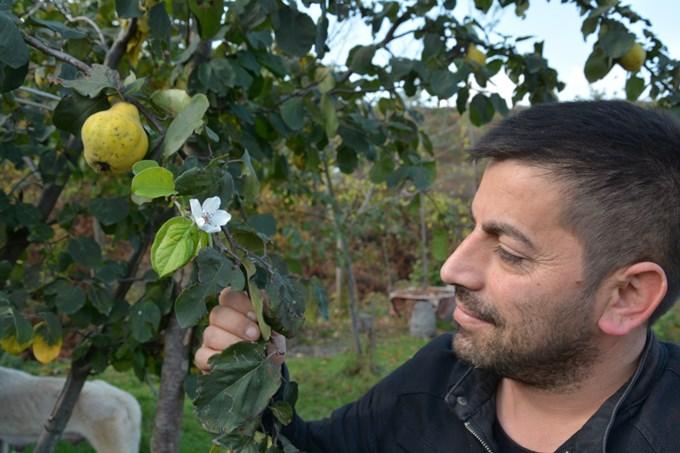 Bu ağaç görenleri şaşıttı - Üzerinde meyve varken...