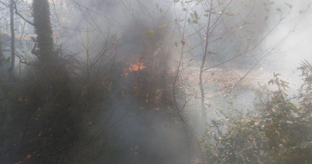 Doğu Karadeniz'in ciğerleri yandı