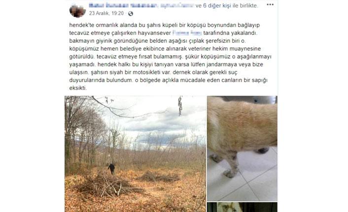 Ormanlık alanda, köpeğe cinsel istismar uygularken yakalandı