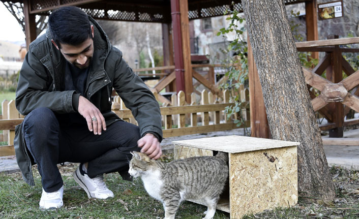 """""""Kediler üşümesin"""" diye kedi evleri yapıp tüm şehri donattılar"""