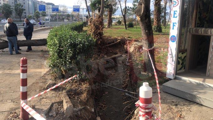 Trabzon'da rüzgara dayanamayan ağaç devrildi