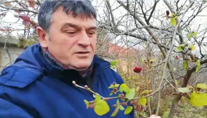 Karadut kış ortasında meyve verdi