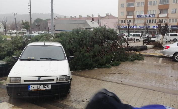Çanakkale'de fırtına çam ağacını devirdi, araçlar hasar gördü