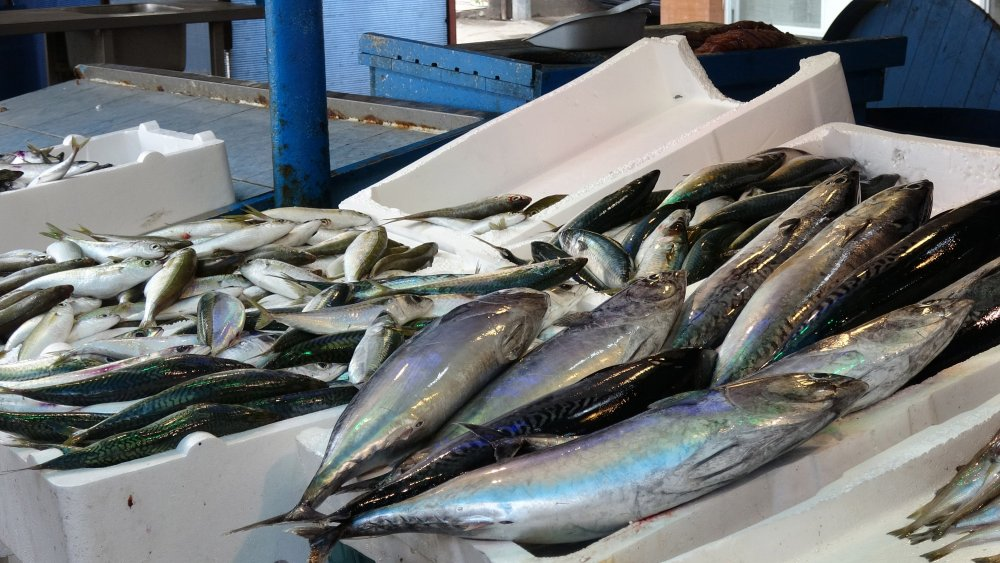 Koronavirüs balıkçılığı da vurdu