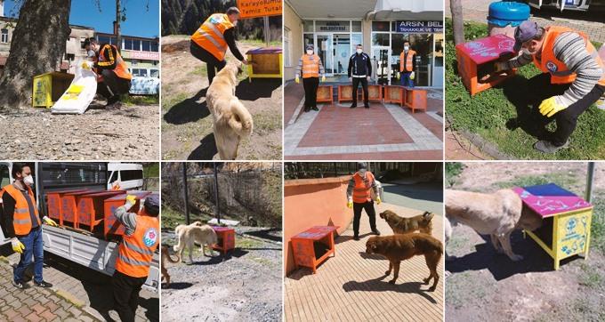 Trabzon'da sokak hayvanlarına mama istasyonu