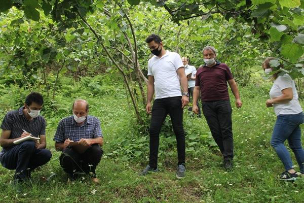 Trabzon'da fındıkta rekolte tespitine başlandı