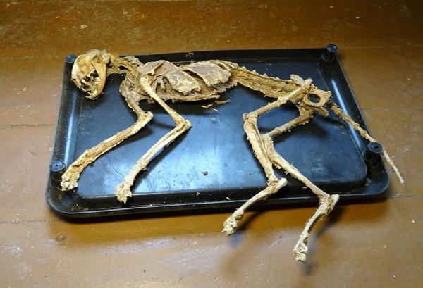 Giresun'da evinde bulduğu iskeletin araştırılmasını istiyor