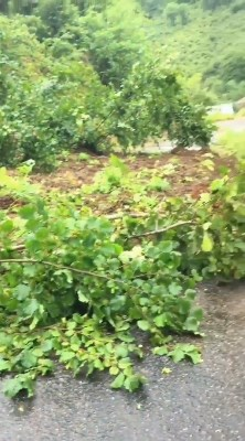 Giresun'da şiddetli yağış heyelan getirdi