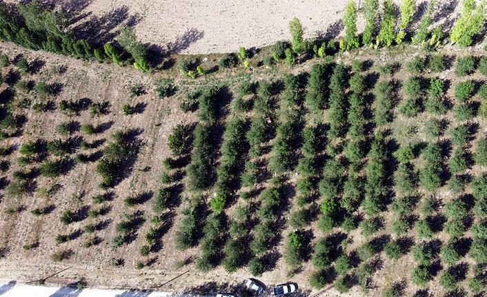Vişne ve kiraz ağacı dikti, tonlarca ürünü dalından satıyor