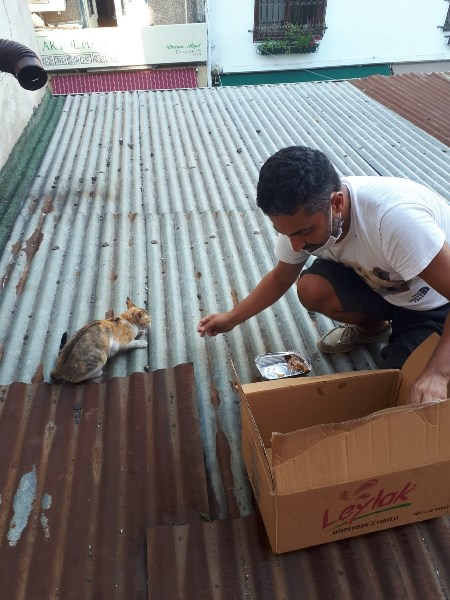Mahsur kalan kediyi hayvan ambulansı kurtardı