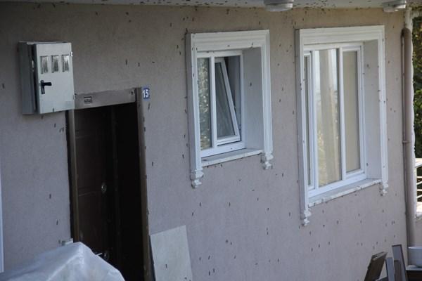 Rize'de vampir kelebekler evlere dadandı