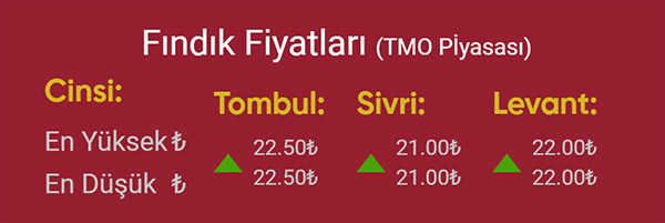 Fındık Fiyatlarında son durum! İşte TMO ve Tüccar rakamları