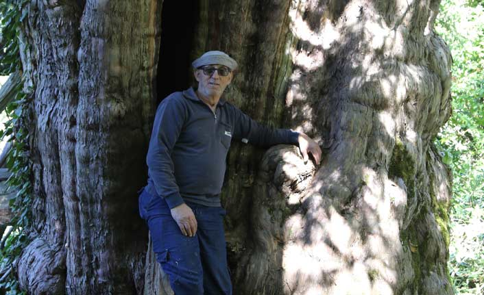 Bu ağaç Türkiye'nin en genişi