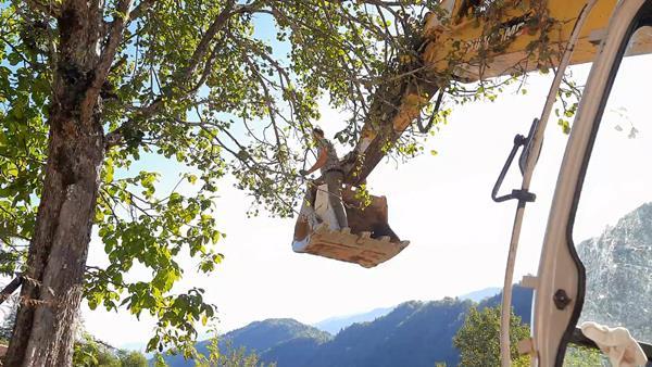 Trabzon'da iş makinesi kepçesiyle, armut topladı