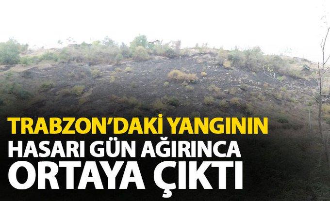 Trabzon'da yangın! Akyazı'da alevler yükseldi
